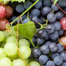 Всичко за гроздобера